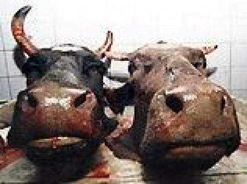 В Марий Эл за бесхозный сибиреязвенный скотомогильник ответит правительство республики