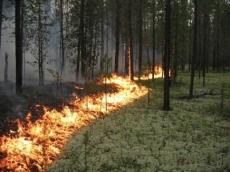 Лесные пожары грозят Марий Эл?