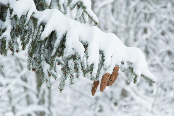 В Старый Новый год столбики термометров поднимутся до отметки -2 °С