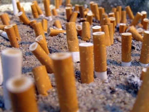 Члены Общественной палаты призывают школьников «стучать» на одноклассников-курильщиков