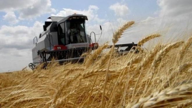 В Марий Эл ожидается хороший урожай зерновых, овощей и картофеля