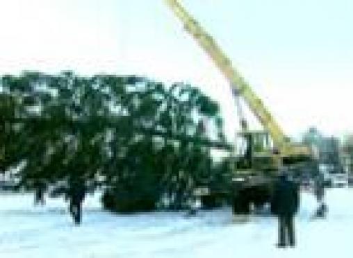 В Йошкар-Оле на центральной площади идет монтаж новогодней ели