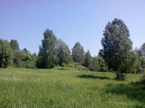 В Медведевском районе в лесу пропал человек