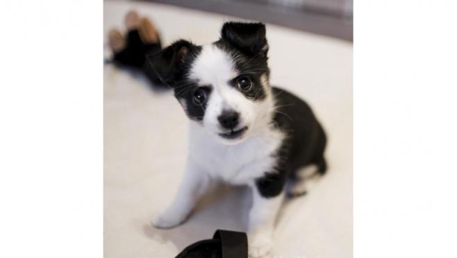 На портале Marimedia.ru выявлен самый симпатичный пёс 2018 года