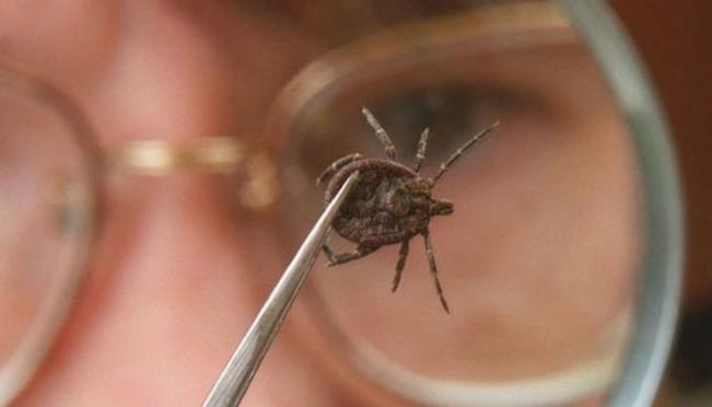 Эпидемиологи предупреждают о небывалой активности клещей
