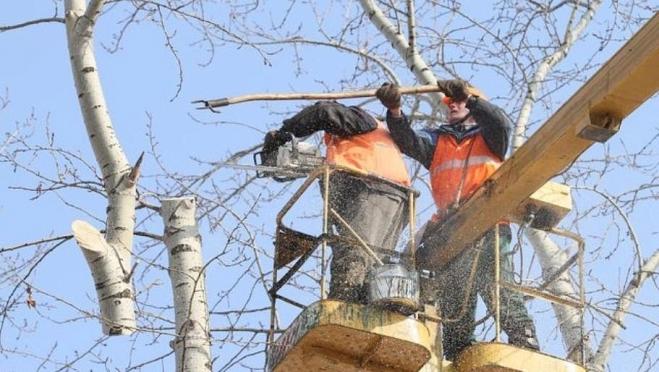 В Йошкар-Оле приступили к формовочной обрезке деревьев