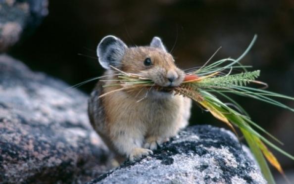 В Марий Эл опасаются вспышки «мышиной лихорадки»
