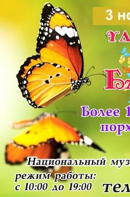 Удивительный мир бабочек