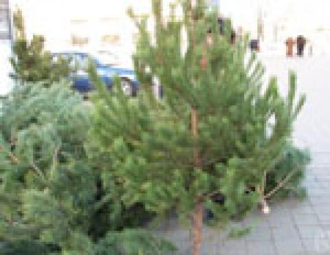 Количество новогодних елок на центральной площади столицы Марий Эл увеличится в 9 раз