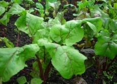 В Марий Эл будут выращивать новые сельскохозяйственные культуры