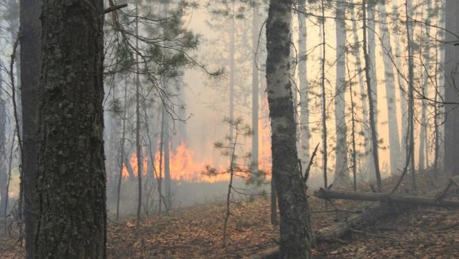 В Марий Эл за день выгорело 3,5 га леса