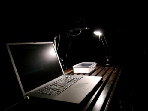 Житель Марий Эл арестован за экстремизм в Интернете