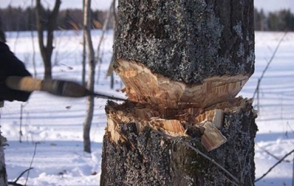 В Марий Эл работник выплатит штраф в полмиллиона рублей