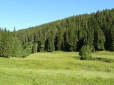 Экологи отмечают факты усыхания ели в Куженерском районе