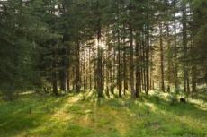 Жителей Марий Эл научат отдыхать в лесах с умом