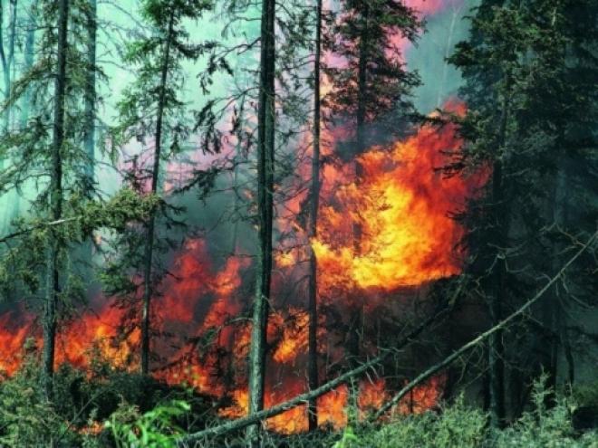 В лесах Моркинского района объявлен наивысший класс пожарной опасности