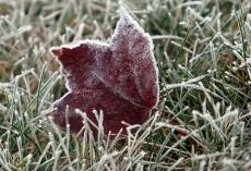 В Марий Эл в ближайшие дни ожидаются заморозки