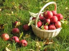 Пациенты наркологического диспансера разбили фруктовый сад «Победа»