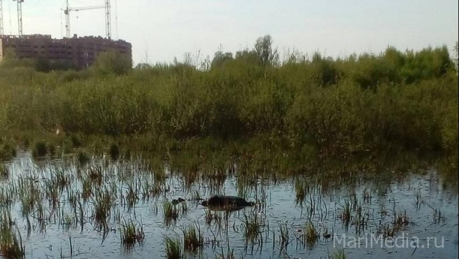 В болоте в районе улицы Ураева найдено тело мужчины