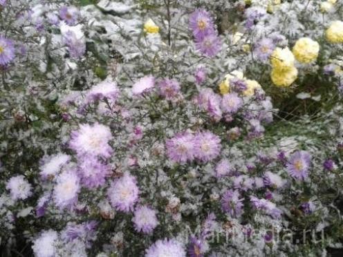 В Марий Эл к концу недели ляжет снег