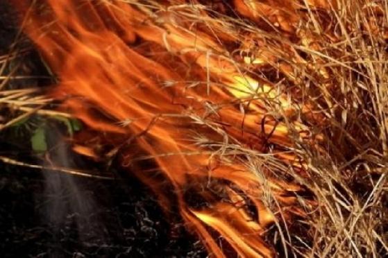 Пожарные Марий Эл все выходные тушили возгорания сухой травы