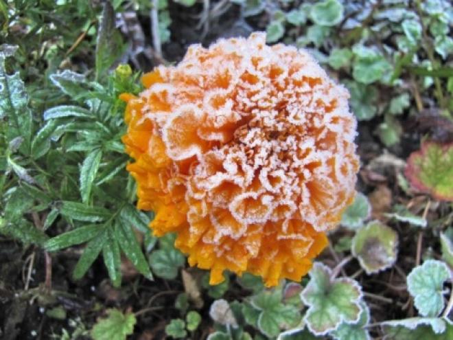 Центральные и восточные районы Марий Эл ожидают заморозки