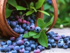 В Марий Эл по вине сборщиков ягод горят леса