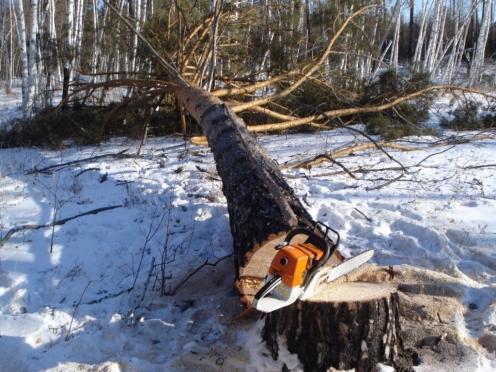 Ущерб от действий «черных лесорубов» в 2015 году превысил 25 млн рублей