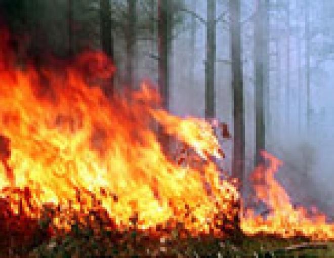 В Марий Эл возобновились лесные пожары
