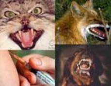 В Марий Эл растет число пострадавших от нападения животных