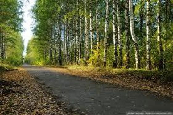 «Аллея здоровья» в Сосновой роще станет благоустроенной зоной отдыха (Йошкар-Ола)