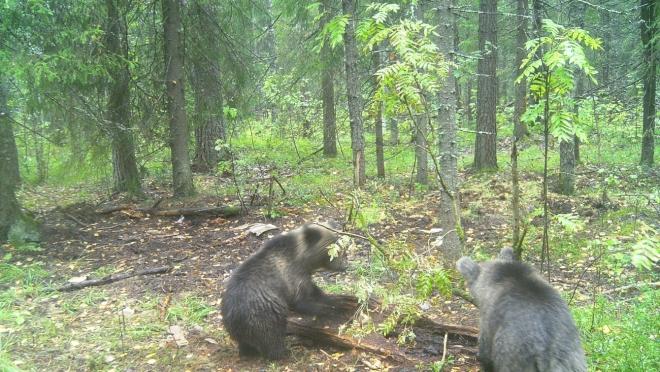 На границе с природным заповедником «Большая Кокшага» может появиться полигон
