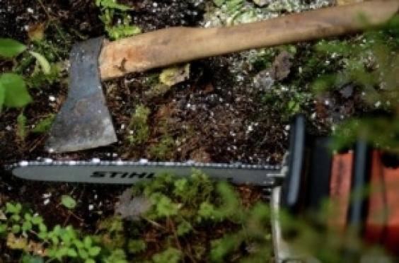 «Черный лесоруб» получил условный срок за 15 спиленных елей