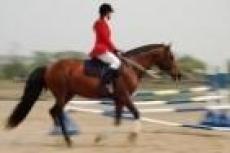 Кто быстрее конь или человек, выясняют сегодня в Марий Эл
