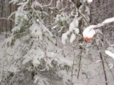 Снегопады в Марий Эл могут затянуться на две недели