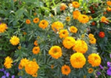 Бульвары Победы и Чавайна станут самой «цветочной» частью Йошкар-Олы