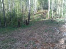В Марий Эл «черный» лесоруб приговорен к двум годам условно за вырубку сосен
