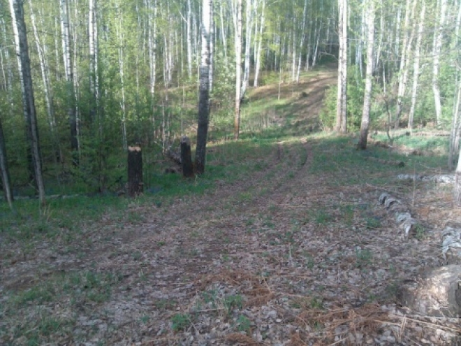 Власти Марий Эл выделят 5 миллионов рублей на восстановление лесов в регионе
