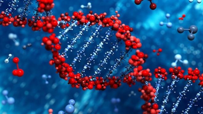 ДНК, как ключ к тайне происхождения человека