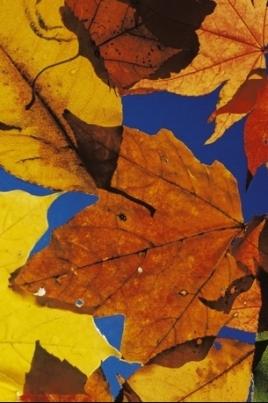 Фестиваль искусств «Марийская осень» постер