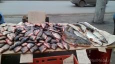 В Волжском районе задержали браконьера с рыбой