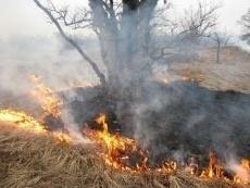 Непотушенный окурок стал причиной лесного пожара в Марий Эл