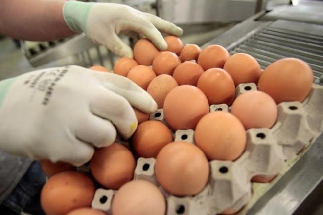 В Россию могут запретить ввоз куриных яиц из США
