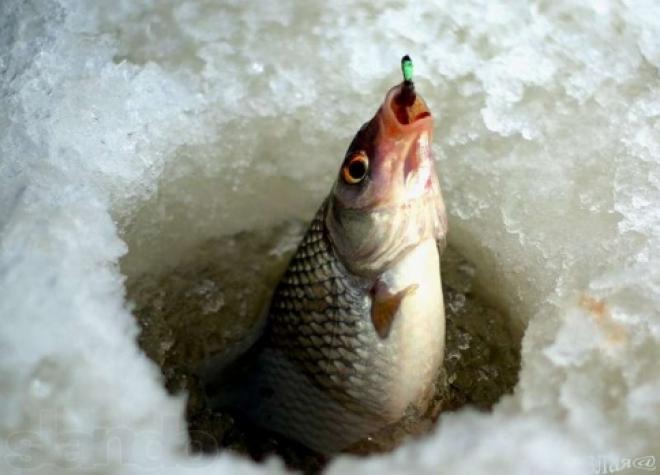 В Марий Эл заканчивается сезон зимней рыбалки