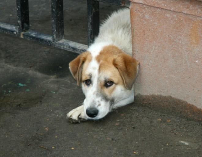 Избавление от домашних любимцев могут приравнять к жестокому обращению с животными