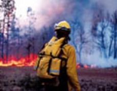 В Марий Эл в апреле выгорело около 1 га лесных площадей