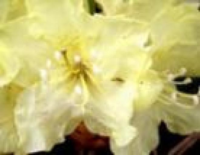 В Марий Эл рост цен на свежесрезанные цветы побил все рекорды