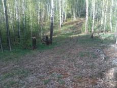 В лесах Марий Эл объявлена чрезвычайная ситуация
