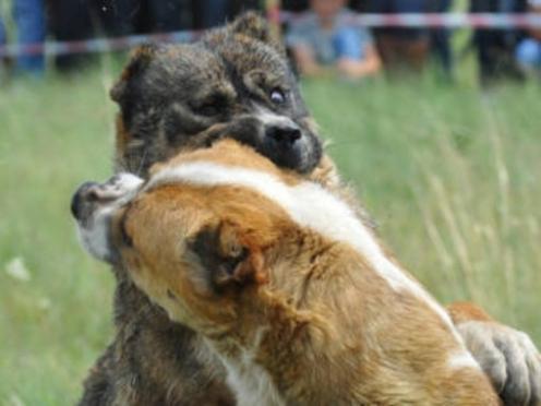 За жестокое обращение с животными будут наказывать жестче