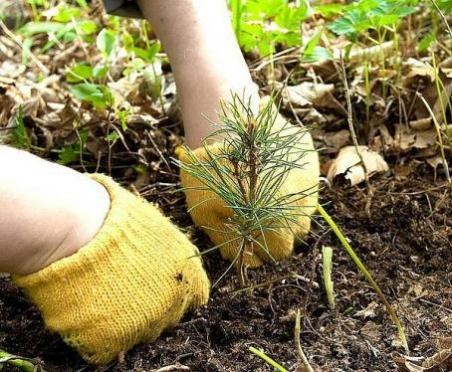 Жителям Марий Эл предлагают воплотить в жизнь один из постулатов – посадить дерево